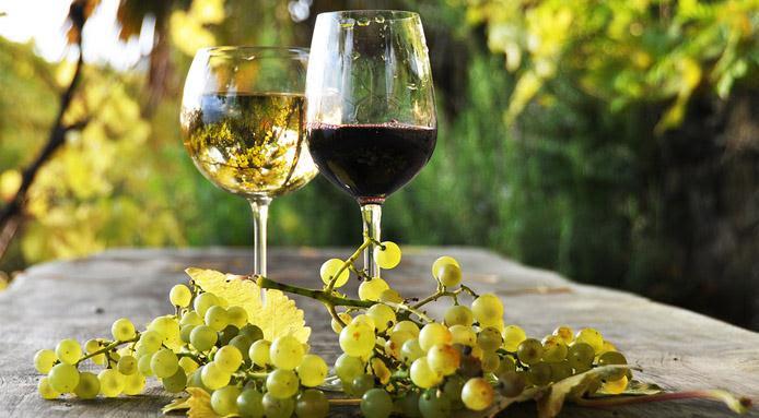 agricoltura vino1