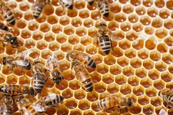 api con alveare per sito