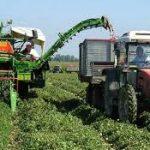 In archivio un'annata difficile per l'agricoltura vicentina