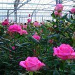 """Convegno """"Le nuove prospettive nazionali e internazionali del florovivaismo italiano oggi"""" – Flormart"""